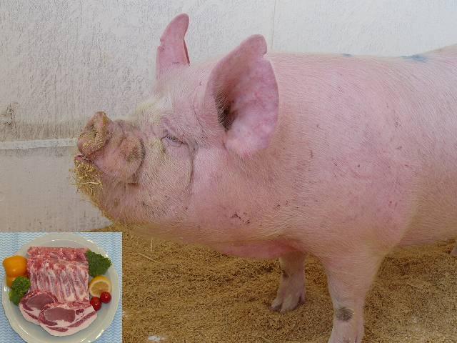 ヨーク三元豚