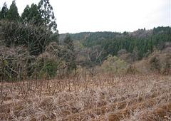 升田かぶの畑
